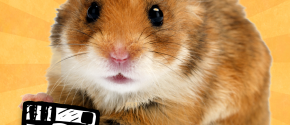 Hamstergram - make people hamsters!
